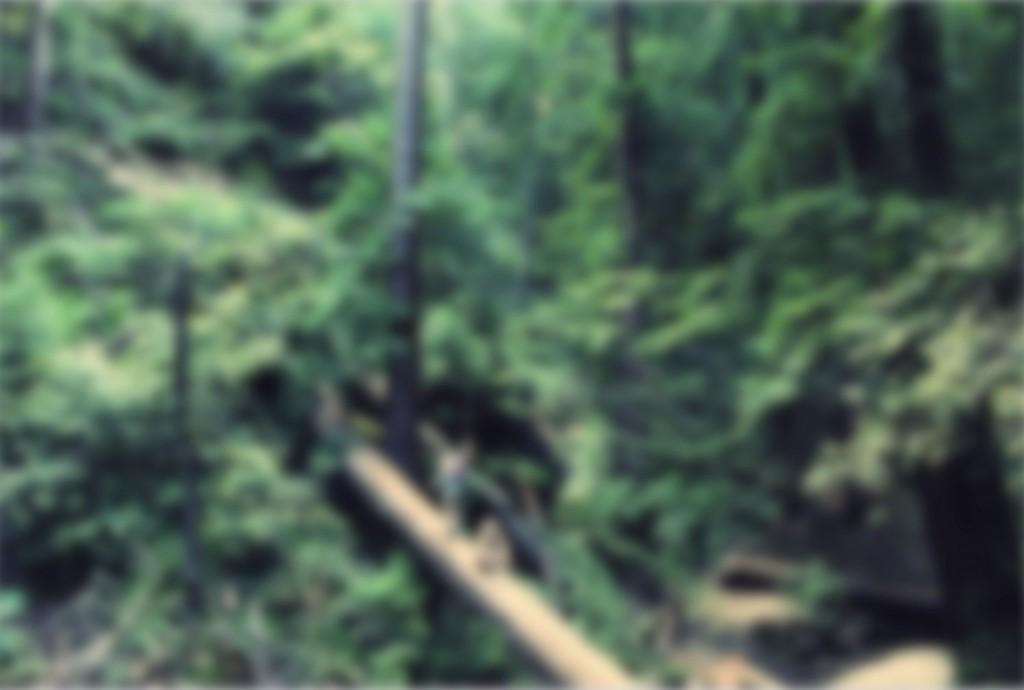 bakgrund_meark_skog